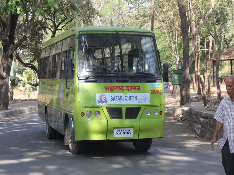borivali national park tiger safari bus 1